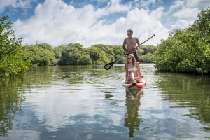 Go on a guided tour and visit the mangroves or discover it for yourself by canoe or SUP (Stand up paddle)!