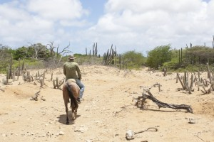 Go horse riding in the beautiful nature of Bonaire!